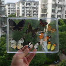 set 8pcs Pretty Butterfly Real Specimen Education Material Collection