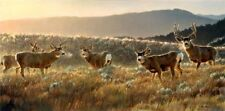 The Gathering Place by Nancy Glazier Deer Print 34x17