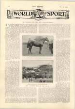 1904 Mr J Maskers Henry I Wins Gatwick Stakes Starr wood Cartoon