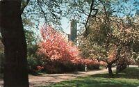 Postcard Schenley Park Pittsburgh PA