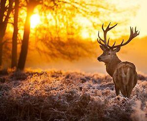 deer stag elk tree sunset painting photo landscape art  CANVAS PRINT