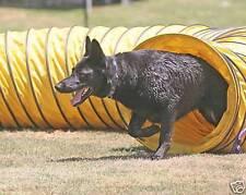 "New 15' Tough Vinyl Dog Agility Equipment Tunnel (4 ""spacing)"