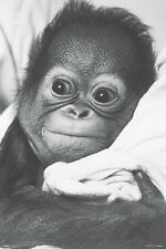 Snuggle poster! Orangutan Cute Cuddly B&W Dorm Décor Baby Sweet New! Never Hung