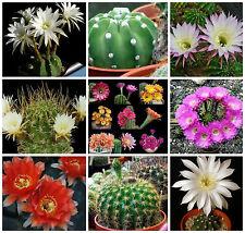 20 semi in miscuglio di Echinopsis+Pseudolobivia ,piante grasse,seed cactus mix