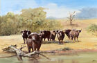 Vtg Oil Painting Water Buffalo Tsavo National Park Kenya Africa Harold W. Clark