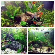 Ten Random Species Low Tech Live Freshwater Aquarium Plants, Easy Beginner Pack