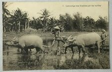 early 1900s Antique Postcard Vietnam Labourage des Rizieres par les buffles