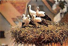 BF40013  nid de  cigogne en alsace stork france  bird oiseau