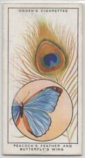 Coloration Of Peacock's Feathers and Butterfly Wings 85+ Y/O Trade Card