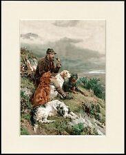 ENGLISH GORDON IRISH SETTER DOGS AND GAMEKEEPER DOG PRINT MOUNTED READY TO FRAME
