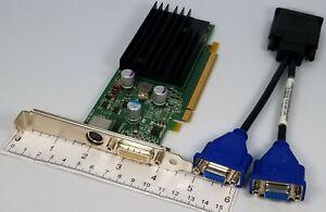 Nvidia GeForce 9300GE DMS-59 Dual VGA Adapter 256MB P805 Windows 10 Video Card