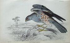 Ash COLORATE Harrier JARDINE Colorato A Mano Antico Bird Stampa 1838