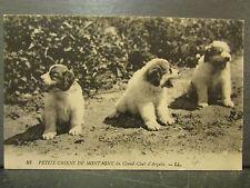 cpa 66 petits chiens de montagne chenil argeles chiots
