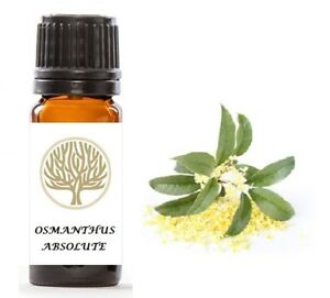 100% Pure Osmanthus Absolute Oil