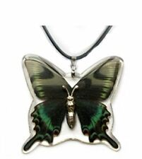 Real Insect Butterfly Necklace Pendant Charm-Papilio Maackii Alpine Swallowtail