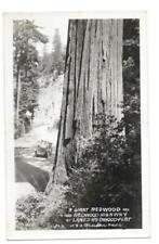 RPPC Real Photo Postcard Giant Redwood Tree Lanes Highway Vtg Car Bendore 322