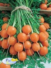Graines de carotte « Marché de Paris » - 1200  graines