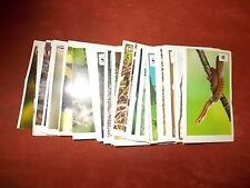 "Edeka - Sammelaktion-Sticker ""Unser Wald"";  20 Stück aussuchen"