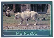METRO ZOO - MIAMI FLORIDA - WHITE BENGAL TIGER  - POSTCARD # 00209