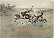 BEAGLE HOUND DOG LIMITED EDITION PRINT - DRY-POINT ENGRAVING - Henry Wilkinson