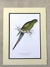 Antique Parrot Print Blossom Feathered Parakeet Parrots Edward Lear Painting