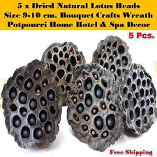 5 x Dried Natural Lotus Heads Seed Pod Bouquet Crafts Wreath Potpourri Decor NEW