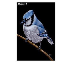 "Blue Jay 4 MATTED PRINT bird wildlife painting Sandrine Curtiss art 4x6"""
