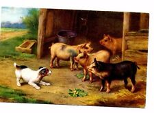 Edgar Hunt - Jack Russell Barking At Pigs - Pig Postcard