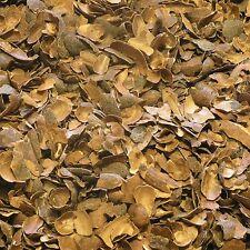 CACAO HUSK Cocoa bean DRIED Herb, Health Care Tea 50g