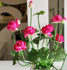 New listing 20-pcs-bag-Aquatic-plan ts-flower-seed-bowl-lotus- Water-Lilies-lotus-seeds