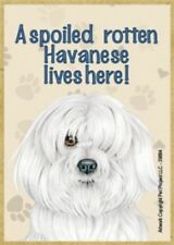 "MAGNET--A Spoiled HAVANESE Lives Here Wood Magnet--3.5"" X 2.5"""