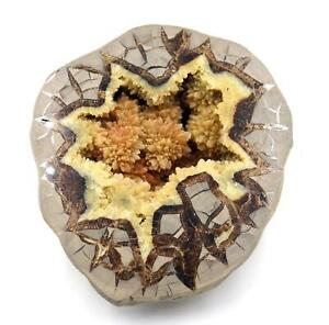 Septarian Nodule (Dragonstone) for Mineral & Fossil Collectors  #16702 121o
