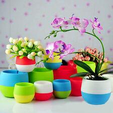1Pcs Random Plant Herbs Flowers Pots Container Home Gardon Office Balcony Decor