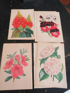 Floral Magazine First Series London ca:1866, 4 plates