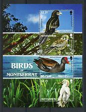 Montserrat 2009 MNH Birds of Montserrat 4v M/S Egrets Kestrel Ani Moorhen Stamps