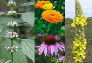 Medicinal Herb Seed Set - Organic - Calendula, Mullein, Motherwort, Echinacea