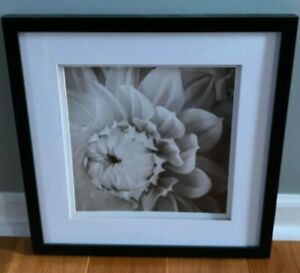 "15"" x 15"" Framed Photography - Flowers"