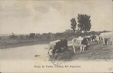 ARGENTINA CAMPO CHUBUT ZANJA DE TRELEW