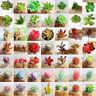 Plastik Künstlich Miniatur sukkulenten Pflanze Kaktus Echeveria Blumen Wohndeko