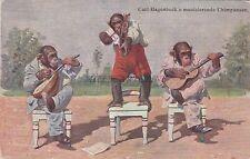 GERMANY - Stellingen-Hamburg - Hagenbeck's Tierpark - Musizierende Chimpansen