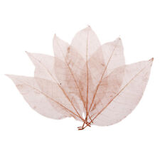 20 Natural skeleton Leaves 2-3 inches width Peepal Bodhi Pho HEART SHAPE Craft B