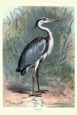 Grey Heron Vintage Cool Wall Decor Art Print
