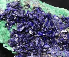 New!! perfect Electric Blue Azurite cluster & Malachite Sepon Mine Laos CM571015