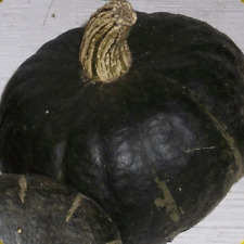 40 Burgess Buttercup Winter Squash Seeds - Everwilde Farms Mylar Seed Packet