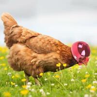 New Helmet Small Pet Hard Shell Headgear Head Protective Duck Chicken W4L7