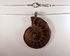 "Elegant Genuine Ammonite Fossil Silver Plated 1-3/4"" Pendant & 16"" Chain  AMMP34"
