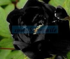 50 Rare Black Sea Golden Pistil Peony Seeds Paeonia Suffruticosa Flower Tree NEW