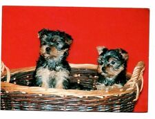 Yorkshire Terrier - Dog Postcard