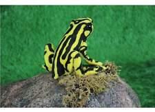 Frosch gelb / schwarz 20 cm Kuscheltier Plüschtier Hansa Toy 6039