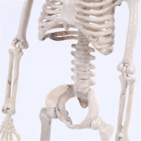 Dekoration Beweglich Skelett Halloween Deko Horror Mann Knochen Gruselig Party